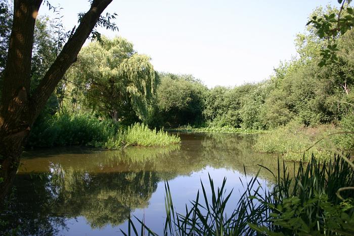 Dorfteich-Guelden